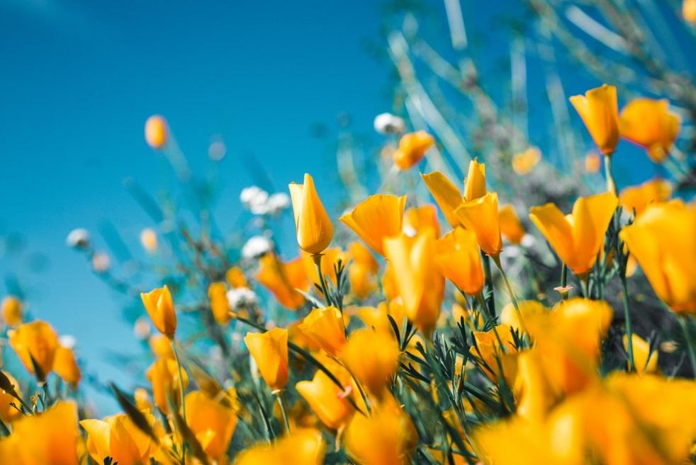 Vantage Spring 2020 Newsletter